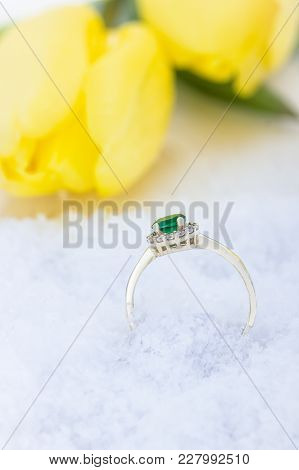 Golden Ring, Snow And Yellow Tulips On A Light Background