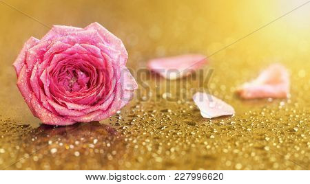 Invitation Card With Pink Rose Flower On Gold Background With Blank, Copy Space
