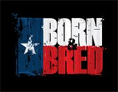 """Grunge Textured Illustration of the phrase """"Born and Bred"""" depicted as a Texan Flag. Custom Lettering poster"""