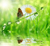 fresh morning dew and butterfly poster