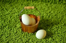 White Eggs On The Bright Green Grass.