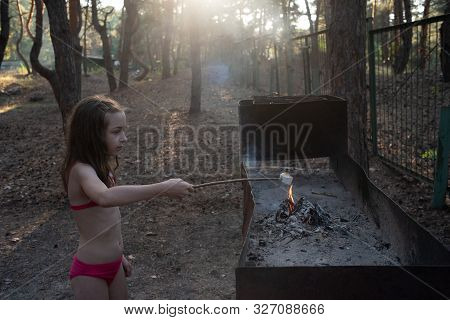 Marsh Mellow At The Stake.marsh Mellows On Wooden Skewers Toasting Over Wood Flames.marshmallows In
