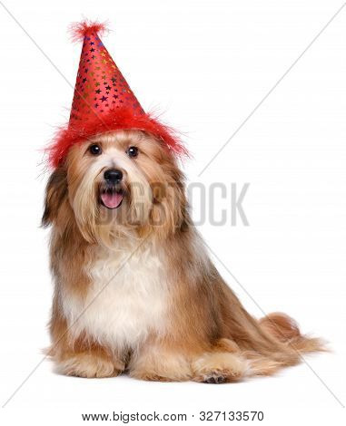 Happy Havanese Dog Is Wearing A Red Birthday Party Hat - Isolated On White Background