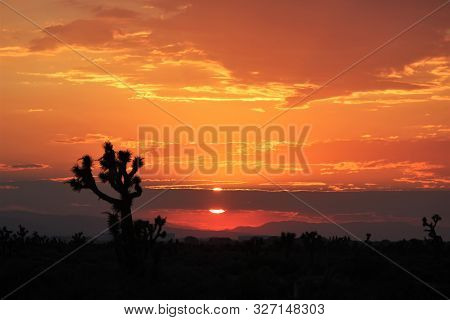 A Blazing Sky In A High Desert Sunset With Joshua Trees In Silhouette