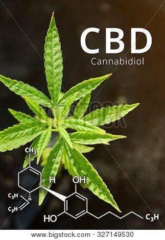 Cannabidiol (cbd) Molecule Formula With Marijuana Background, Cannabis Leaves.