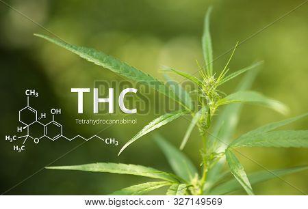 Tetrahydrocannabinol Or Thc Molecule Formula With Marijuana Background, Cannabis.