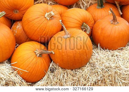 Thanksgiving And Halloween: Multiple Pumpkins On And Around Stacks Of Hay. Pumpkin Patch.