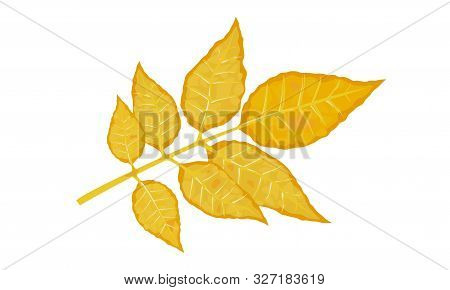 Yellow Leaf Of Fraxinus Or Ash Tree. Calmness, Melancholy, Tranquillity, Beautiful Nature Concept..