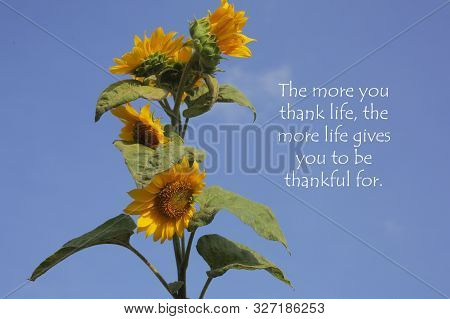 Inspirational Motivational Quote - The More You Thank Life, The More Life Give You To Be Thankful Fo