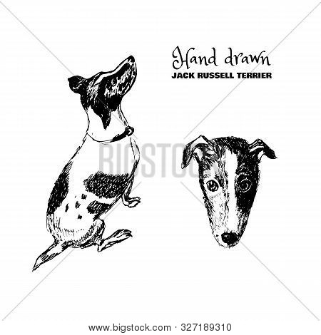 Hand-drawn Sketched Jack Russell Terrier. Black And White Set Of Sneaking Dogs. Vector Illustration.