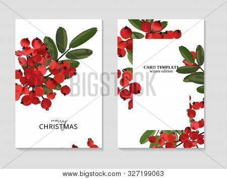Ash Berry Greeting Merry Christmas Cards, Winter Seasonal Art Drawing Template.
