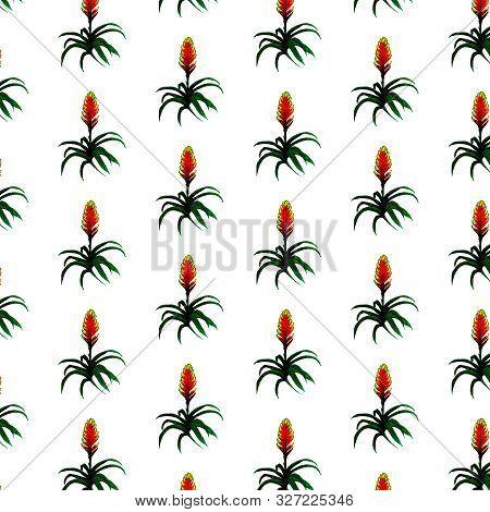 Guzmania Bromelia Plant Watercolor Illustration Pattern. House Tropical Plant. Hand Drawn Exotic Pla