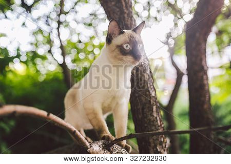 Cat Climbing Tree. Cat Hunts On Tree. Adorable Cat Portrait Stay On Tree Branch. Purebred Shorthair