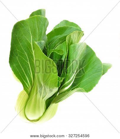 Vegetable, Delicious Fresh Green Bok Choy, Pok Choi Or Pak Choi Isolated On White Background.