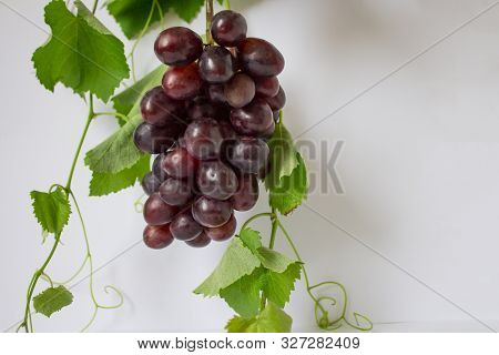 Bunches Of Fresh Ripe Red Grapes On A Wooden Background. Ancient Grapes. Red Wine Grapes. Dark Grape