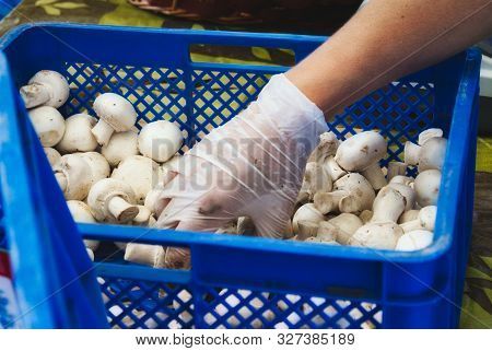 A Food Handler With Latex Glove Picking Up White Button Mushrooms From A Plastic Crate