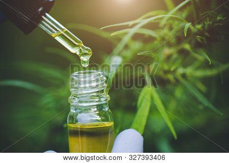 Cbd Hemp Oil, Hand Holding Bottle Of Cannabis Oil In Pipette.  Cbd Hemp Oil, Medical Marijuana Oil C