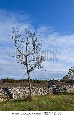 Dry Stone Wall With A Lone Tree And A Stile In The World Heritage At The Swedish Island Oland