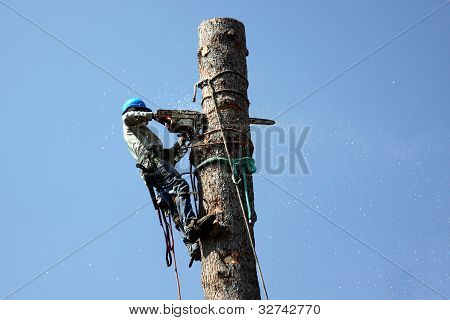 Tree Trimmer Jobs