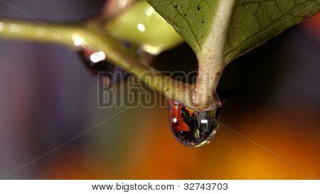 Water Drop On Flower Stem