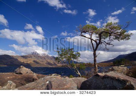Tree And Slioch