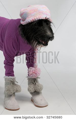 Dog with casual style winter clothes, studio shot