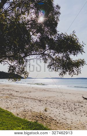 Tasmanian Beach Landscape View In Hobart With Gum Tree In The Foreground And Sunflare Shot At Dusk W