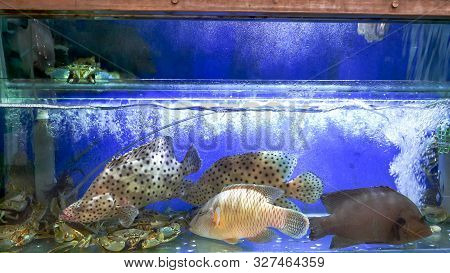 Fishtanks With Live Fish And Seafood At Fa Yuen Market In Hong Kong