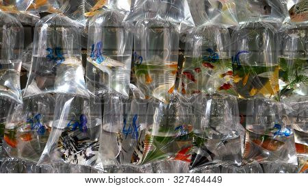 Tropical Fish In Plastic Bags At Mongkok Markets In Hong Kong