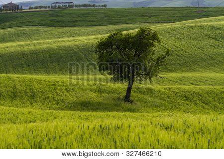 Tuscany italy  Europe, Toscana, Landscapes, Siena, Castiglione, della, Pescaia poster