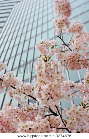 Urban Blossoms
