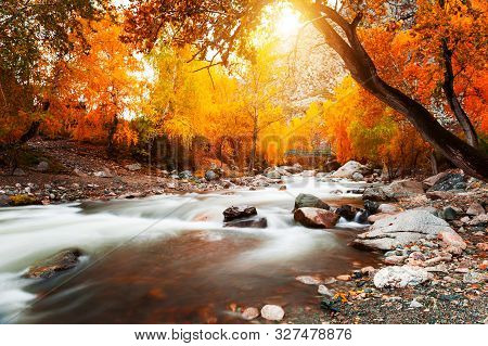 Yellow Autumn Forest And Katun River In Altai Mountains, Siberia, Russia. Long Exposure Shoot. Beaut