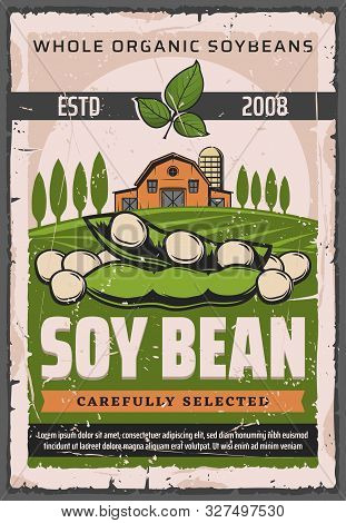 Soy Bean Pods Of Soya Plant On Green Farm Field With Barn And Trees Vector Design. Soybean Legume Se