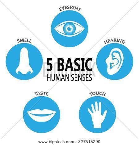 Poster Five Basic Human Feelings. Set Icons The Five Senses Of Human Perception. Eyesight, Hearing,