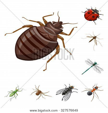 Isolated Object Of Insect And Fly Symbol. Set Of Insect And Entomology Vector Icon For Stock.