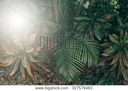 Vertical Garden With Tropical Green Leaf, Dark Tone With Sunrise.