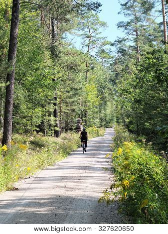Lone Bicycle Rider On Apathy Through Dense Pine Forest Und Blue Sky And Sunshine Near Nuremberg, Ger