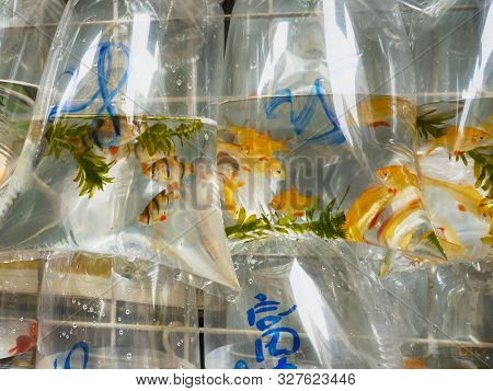 Close Up Of Plastic Bags Containing Tropical Fish In Mongkok Markets