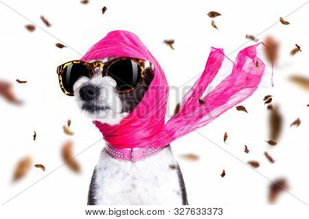 Chic Fashionable Diva Luxury  Cool Dog With Funny Sunglasses, Scarf And Necklace, Isolated On White