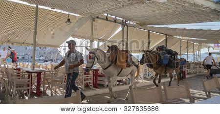 Hydra, Greek Island - July 20 2019; Horses Of Hydra Being Lead Along Path Between Restaurant Tables