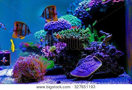 Dream Coral Reef Saltwater Aquarium Tank Scene