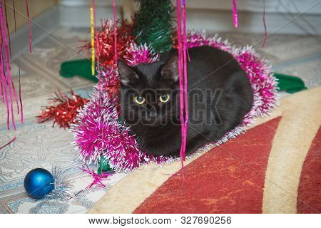 Black Cat At Christmas Under The Christmas Tree. Domestic Cat Lies Under The Christmas Tree Close-up