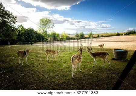 Young fallow deer (Dama dama ) in a beautiful natural background