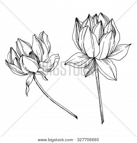 Vector Lotus Floral Botanical Flower. Black And White Engraved Ink Art. Isolated Lotus Illustration