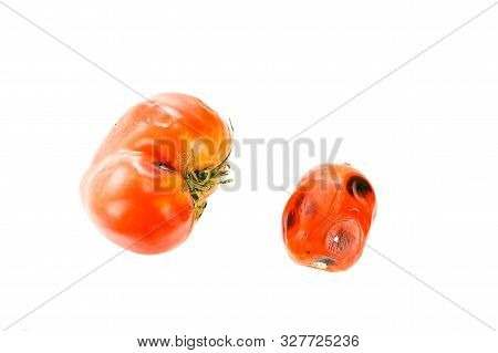 Little And Big Rotten, Spoiled Tomatoes With Mold Spots On Skin, Sepals Or Calyx, And Uneven Ripenin