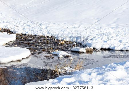 Spring And Babbling Brook In The Snow, A Bright Sunny Day. Symbol Of The End Of Winter And Cold Weat