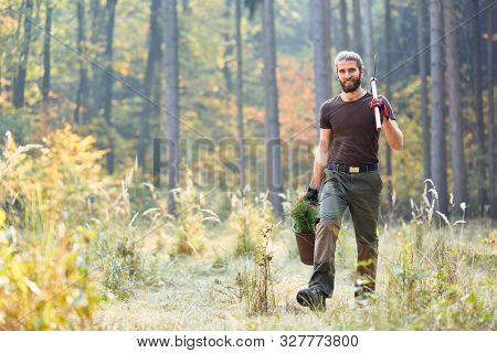 Young ranger in the forest in afforestation with pine seedling for sustainability