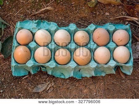 One Dozen Unwashed Chicken Eggs In Open Carton Blue Cartoon On The Dirt Top View