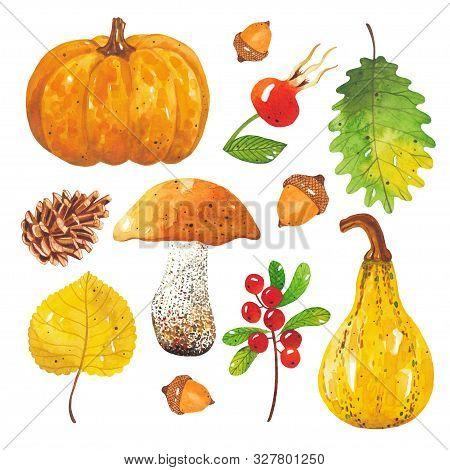 Watercolor Hand-drawn Set Of Autumn Harvest. Autumn Mushroom, Leaf, Pumpkin, Acorn, Cone, Rosehip, C