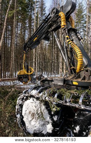 Timber Industry. Logger Cuts Tree In Winter Forest